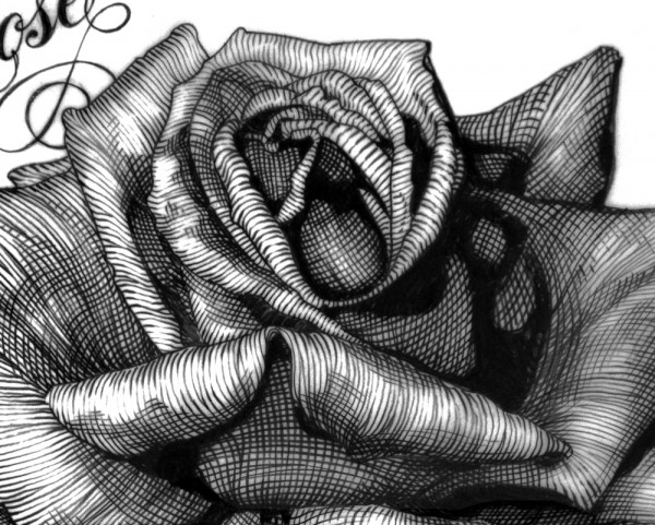 black rose pencil.1979.final Red detail 2