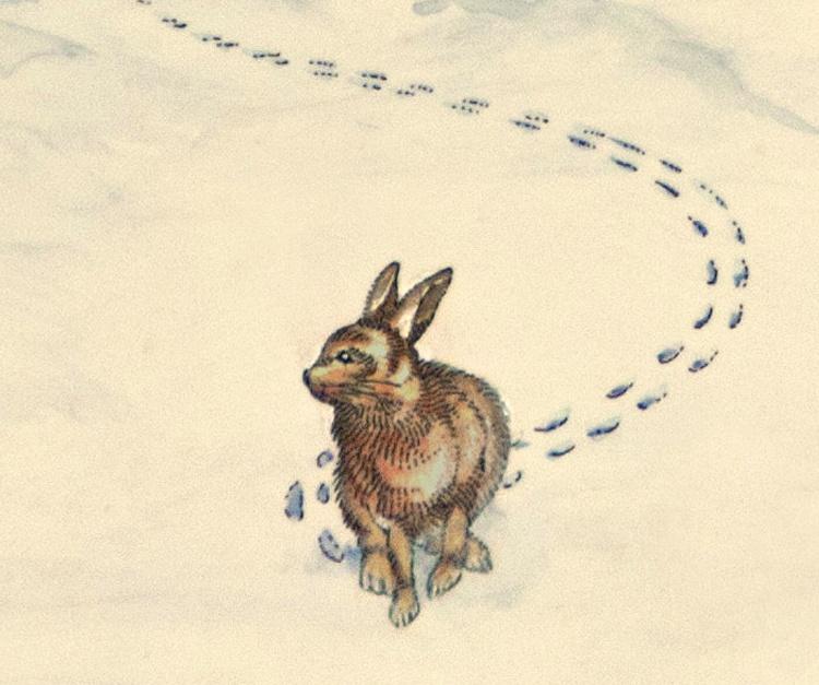 winter rabbit in snow jim fitzpatrick. Black Bedroom Furniture Sets. Home Design Ideas